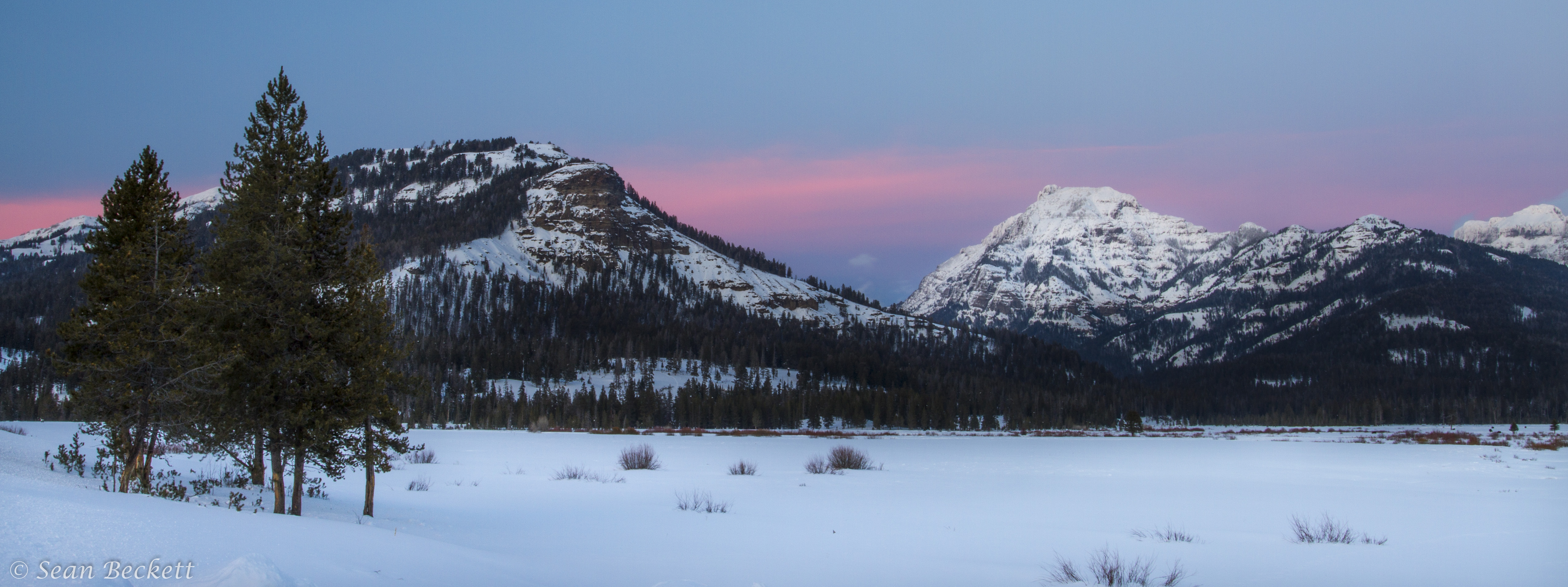 Winter In Yellowstone Alone With Wolves In The Lamar Valley