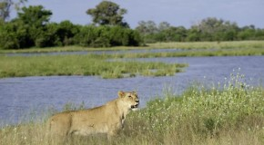 A Thirst for Adventure in Botswana