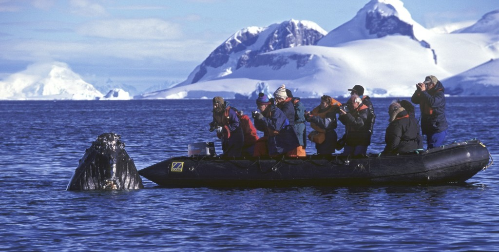 Antarctica cruise zodiac excursion, whale watching