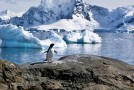 Will Climate Change Increase Antarctica's Biodiversity — Or Diminish It?