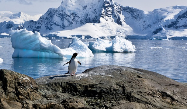 climate changing in antartica The pristine white landscape of antarctica has disappeared plant life is growing rapidly due to climate change turning the continent green few plants live on antarctica but scientists.