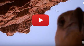 Eagle Steals a Camera and Creates One-of-a-Kind Film