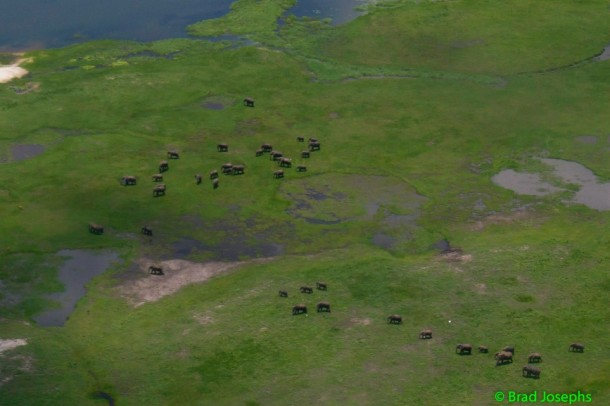 Arial shot of elephant herd in Africa