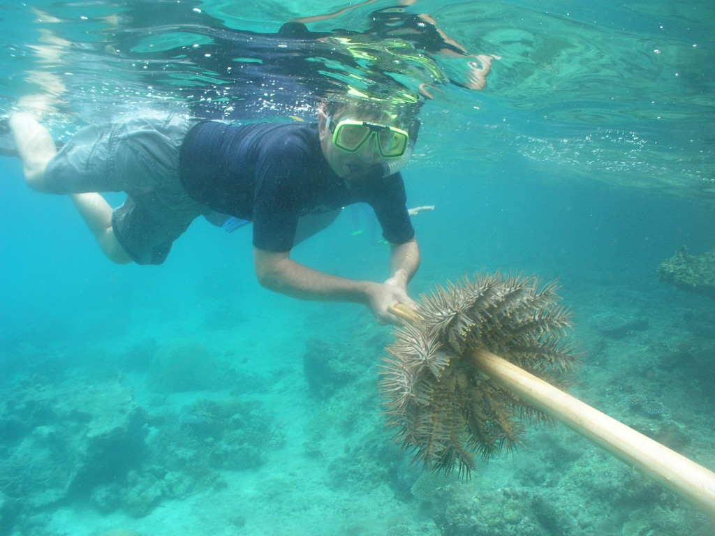 WWF member Kevin Kaster spears an invasive crown-of-thorns starfish in Palau. © Ron Leidich