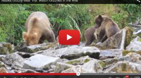 Video of the Week: Unbelievably Close to Grizzlies in Alaska