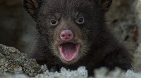 Photos: A black bear cub sees the world for the first time!