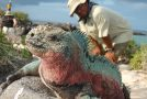 Galapagos Animals, Oh My!