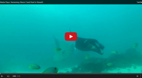 "Video: An ""Underwater Ballet"" of Manta Rays in Indonesia"