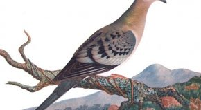 On the Loss of Passenger Pigeons and Parks