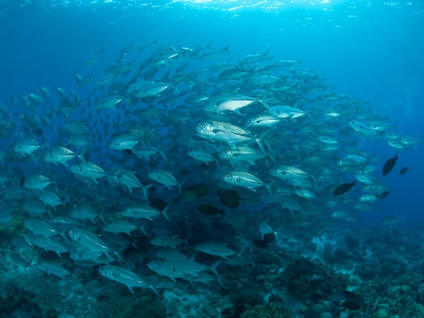 Top 10 facts about the world 39 s oceans for Freund s fish