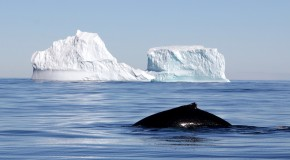 Japanese Whaling: Truly for Sustainability Science, or Only for Cultural Consistency?