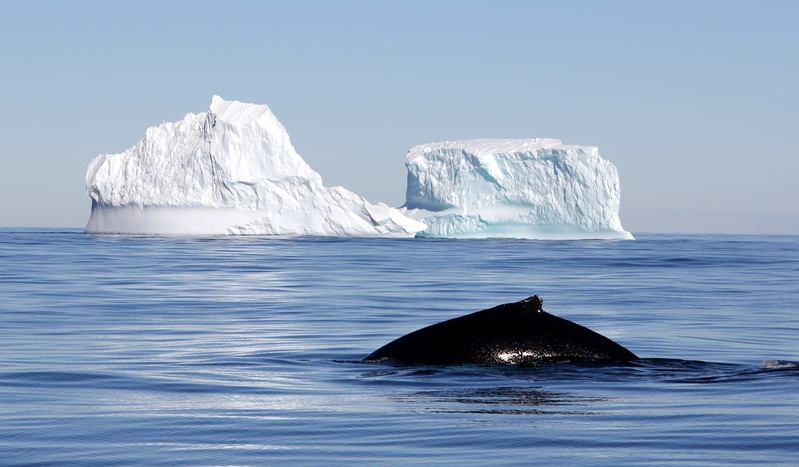 international convention for the regulation of whaling pdf