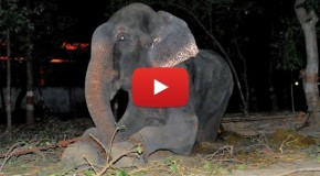 Video of the Week: Raju the Elephant Cries Tears of Joy after Being Rescued from 50 Years of Abuse