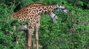 Top 10 Least Heard of Animals to See in Zambia