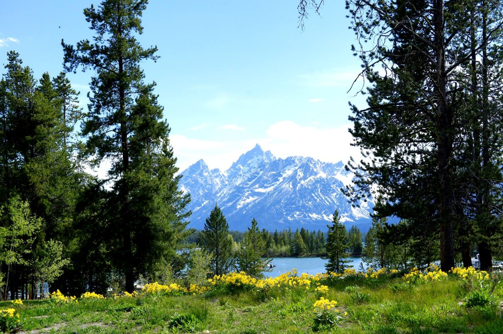 Grand Teton National Park, Grand Tetons, beautiful wildflowers, blue skies, nature, conservation, Wyoming, National Parks