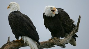 USDA Wildlife Services Killed More Than Four Million Animals in 2013. Was It Justified?