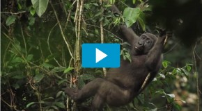 Video of the Week: Spend One Amazing Minute in The Congo Basin