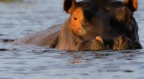 Botswana's Okavango Delta named 1,000th UNESCO World Heritage Site