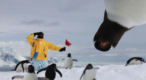 Meet 5 Fascinating Antarctic Penguins