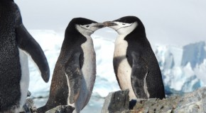 5 Reasons to Visit Antarctica Early in the Summer Expedition Season