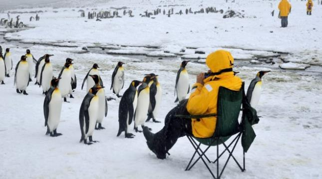 group of emperor penguins inquisitively approaches a trip guest photographing them in a collapsing camp chair