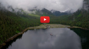 Video: Model Management in the Great Bear Rainforest