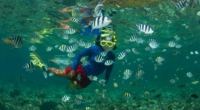 Choose Your Next Great Snorkeling Trip