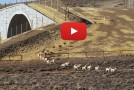 Video of the First Federally Protected Wildlife Corridor: the Pronghorn Path