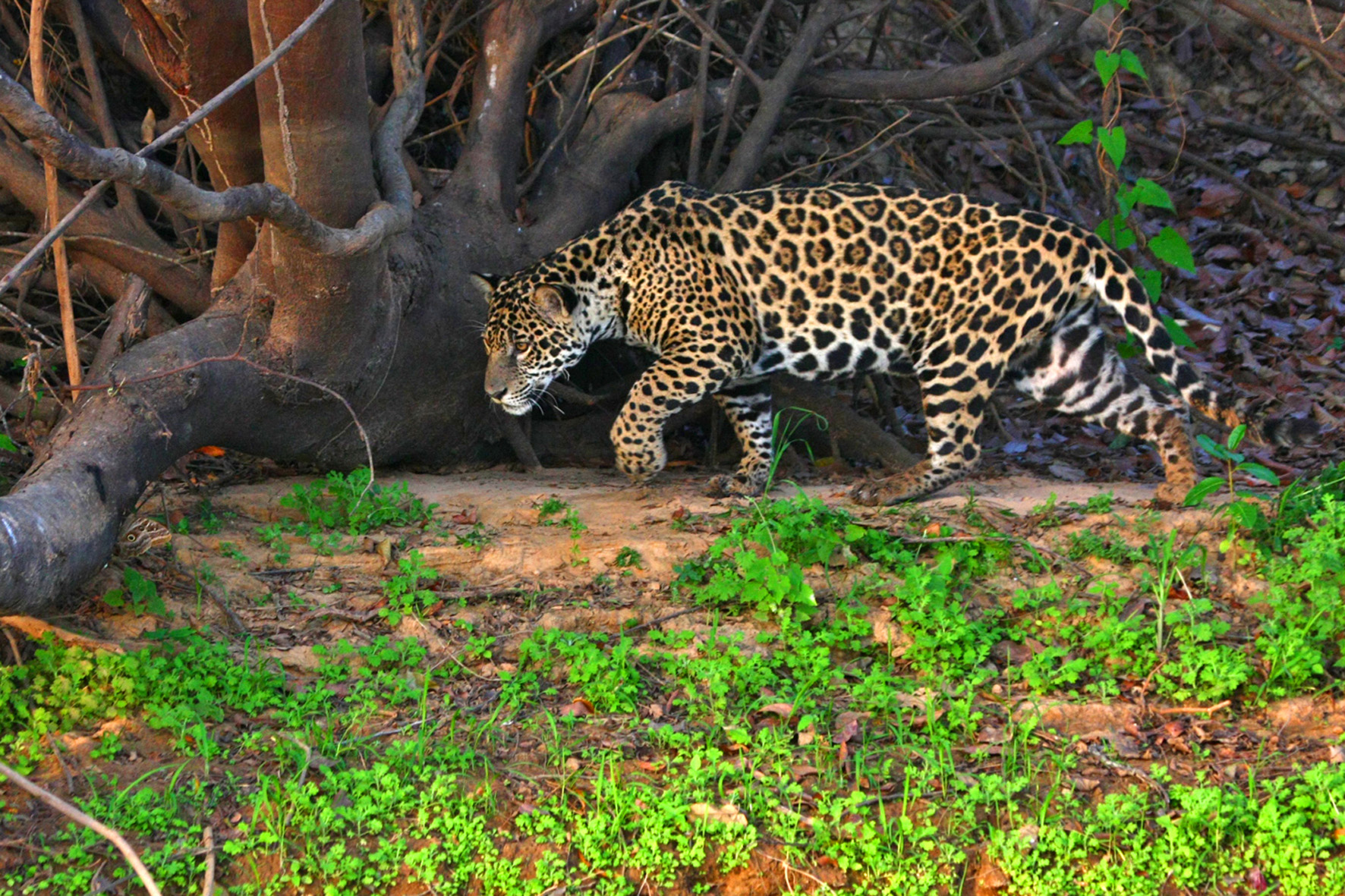 11 Facts About the Pantanal Wetlands
