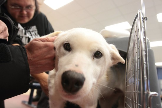 Looking chipper and ready for follow-up veterinary care in Winnipeg. Photo copyright: Brad Josephs