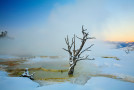 The Yellowstone National Park-Ebola Connection: Could It Help Protect More Natural Places?