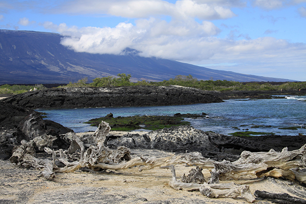 The westernmost island in the Galápagos is Fernandina. The third largest and youngest of the islands, it is less than one million years old and is the most volcanically active. It sits at the center of the hot spot that created the archipelago. ©Candice Gaukel Andrews