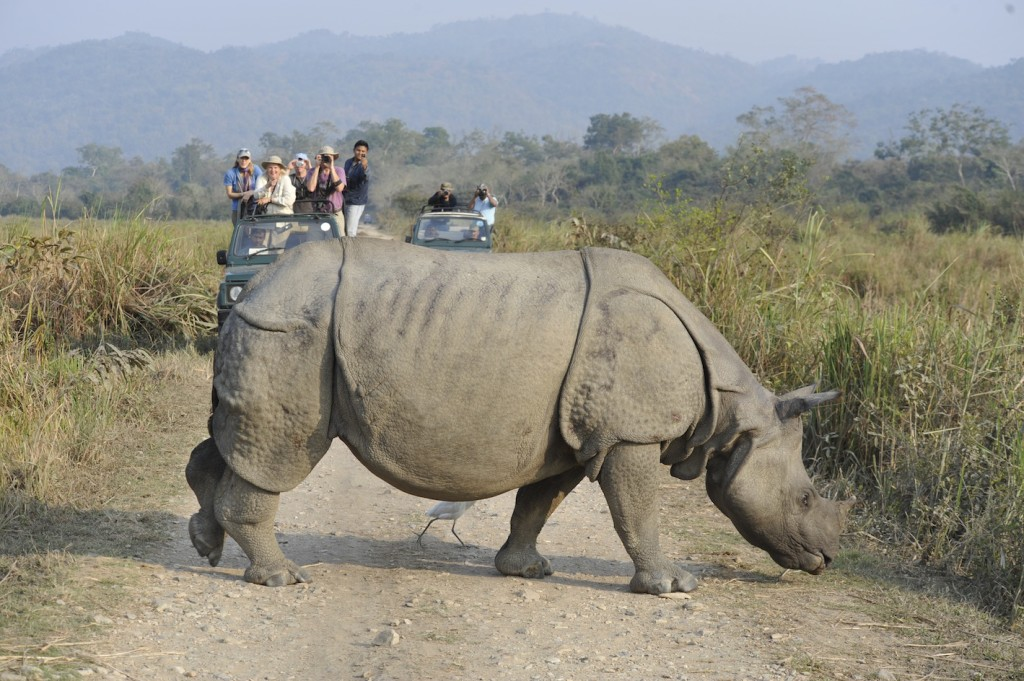 Rhino in Kaziranga National park. (c) Toby Sinclair/NHA