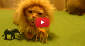 Video of the Week: Adorable House Cat Longs for the Savanna