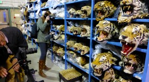 Illegal Wildlife Trafficking: U.S. Doubles Down