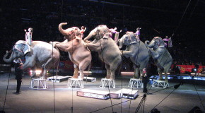New Trip for 2018: Circus Elephants of Central Florida