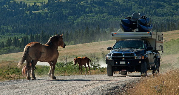 Tourists will need to share the rustic roads with Montana's equine residents. ©Candice Gaukel Andrews