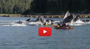 Video: How Whales Help Sequester CO2