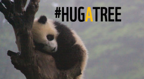 #HugATree for Earth Day