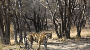 Wildlife Photo of the Week: Queen of Ranthambore