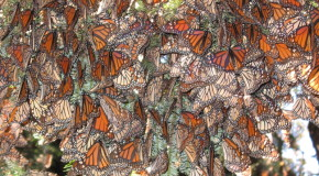 Obama's New Plan May Save Monarchs and the U.S. Food Supply