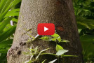 Video: Discovering the Unseen Natural World