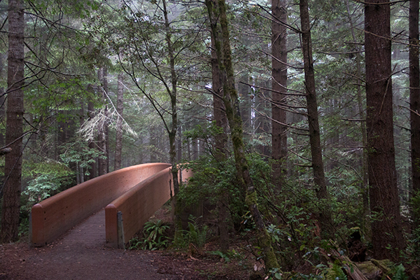 A footbridge invites you to explore the Lady Bird Johnson Grove in Redwood National Park. ©Candice Gaukel Andrews