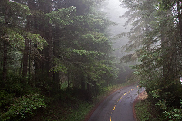 Fog from the Pacific Ocean keeps the trees in Redwood National Park continually damp, even during summer droughts. ©Candice Gaukel Andrews