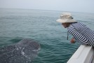 3 Things I Learned While Swimming with Whale Sharks