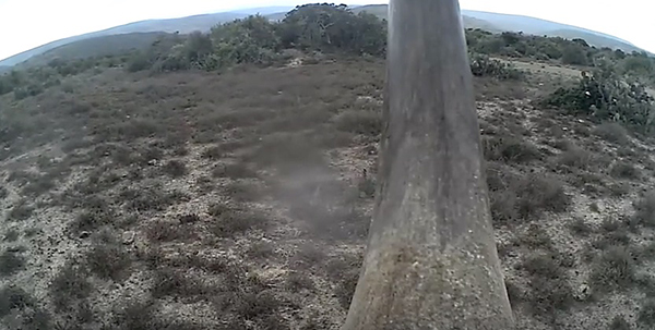 "This scene comes from a ""rhino cam,"" a small camera embedded in the top horn of a rhino. ©From the Protect video ""‪Protect RAPID anti-poaching system‬"""