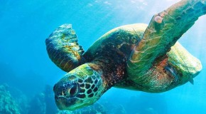 See and Save Sea Turtles