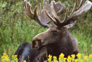 Wildlife Roundup – Top 5 North American Animals You Can Still See in the Wild