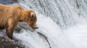 Wildlife Photo of the Week: Grizzly Staring Contest