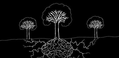 """Fungal mycelia connect the roots of trees in a forest. ©From the video """"Do Trees Communicate?,"""" Dan McKinney, Black Forrest Productions, 2011"""